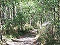 Forêt de la Coubre 014.jpg