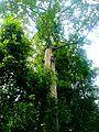 Forest,sabarimala,kerala - panoramio.jpg