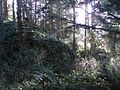 Forest (8483466174).jpg