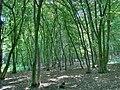 Forest - panoramio - paulnasca (71).jpg