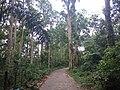 Forest Feel.jpg