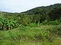 Forest in Ko Pha Ngan 2.jpg