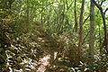 Forest in Mt.Tsukuba 02.jpg