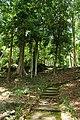 Forest on Khao Tha Phet.jpg