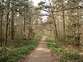 Forest track in Queen's Wood - geograph.org.uk - 454533.jpg