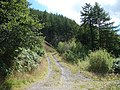 Forestry Track - geograph.org.uk - 520659.jpg