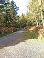 Forestry road in Wyre Forest - geograph.org.uk - 1027302.jpg
