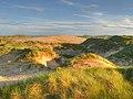 Forvie, mobile sand dunes - geograph.org.uk - 1399339.jpg