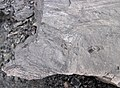 Fossiliferous mudshale (Price Formation, Lower Mississippian; Cloyds Mountain roadcut, Valley Coalfield, Virginia, USA) 12 (30377535842).jpg