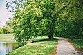Frederiksborg Castle Park - tree.jpg