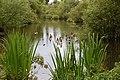 Frogmore Lakes - panoramio.jpg