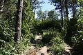 Główny Szlak Beskidzki - Path to Smerek 04.jpg