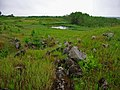 G. Nizhnyaya Tura, Sverdlovskaya oblast' Russia - panoramio - Oleg Seliverstov (24).jpg