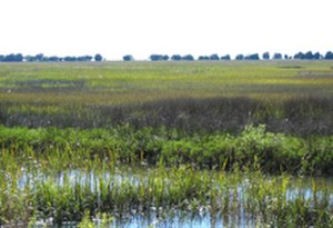 Sapelo Island National Estuarine Research Reserve - Marsh in the reserve