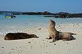 Galápagos Inseln, Ecuador (13918667084).jpg