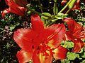 Garden park flower.jpg