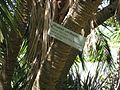Gardenology.org-IMG 0344 rbgs10dec.jpg