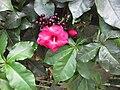 Gardenology.org-IMG 1781 hunt09oct.jpg