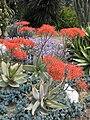 Gardenology.org-IMG 4403 hunt0904.jpg