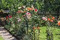 Garten Juli 2014 (15303034130).jpg