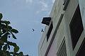 Gedung sarang burung walet Sampit.JPG