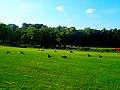 Geese in Vilas Park - panoramio.jpg