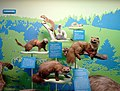 Geneva Natural History Museum - carnivore.jpg
