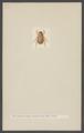 Geniates - Print - Iconographia Zoologica - Special Collections University of Amsterdam - UBAINV0274 001 06 0019.tif