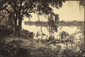 Georgia, Savannah River, near Savannah - NARA - 533420.tif