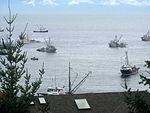 Georgia Strait Herring Fishery, 2010 (4395268283).jpg