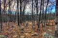 Gfp-missouri-taum-sauk-mountain-state-park-hiking-trail.jpg