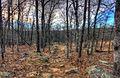 Gfp-missouri-taum-sauk-mountain-state-park-hiking-trail.jpg