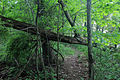 Gfp-pennsylvania-eerie-bluffs-state-park-fallen-tree-gate.jpg