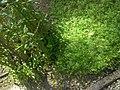 Giardino botanico di Brera (Milan) 317.jpg