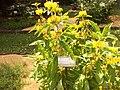 Giardino botanico di Brera (Milan 33.jpg