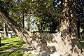 Glasnevin Cemetery - (442807165).jpg