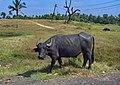 Goa Colva - panoramio.jpg