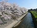 Gojo-gawa in Iwakura 02.JPG