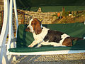 Good place for a basset hound.jpg