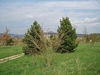 Grünes Labor Coburg, Ansicht mit Veste im Hintergrund.jpg