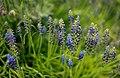 Gradina Botanica (8738476579).jpg