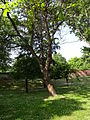 Gradski Park-Skopje (129).JPG
