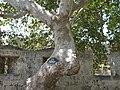 Greece Rhodes Rodos - panoramio (1).jpg