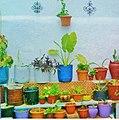 Green.plants.jpg