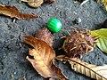 Green (6202685937).jpg