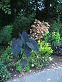 Green Spring Gardens Park - plants by parking lot3.JPG