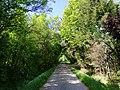 Green tunnel near winterbach.jpg