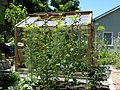Greenhouse in Berkeley Cottage Garden 08.jpg