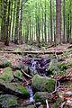 Großen Schachtenwanderung ab Buchenau im Nationalpark Bayerischer Wald 14.JPG