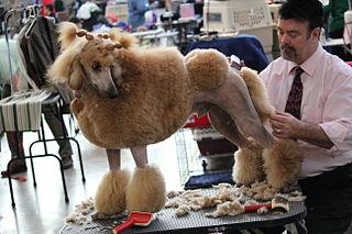 Creative Dog Grooming Bloomsburg Pa